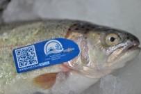 ALABALIK - Balıklar Mavi Karekod İle Takip Edilecek