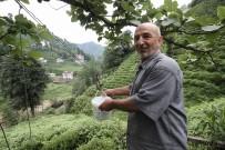 BÜYÜKKÖY - Rize'de Çaydan Sonra Suya Da Teleferikle Çözüm