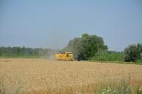 SU SIKINTISI - Doğunun Çukurova'sında Buğday Hasadı Başladı