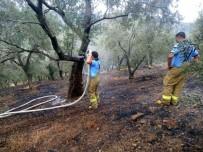 Edremit'teki Yangında 3 Dönüm Zeytinlik Zarar Gördü