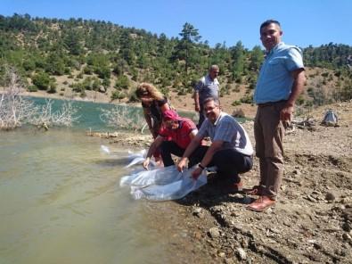 Karaman'da Çukur Göletine 20 Bin Yavru Sazan Bırakıldı