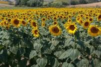 MAY Tohum İhracatını Yüzde 15 Arttırdı