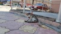 Otomobilin Çarptığı Yavru Kedinin Başından Biran Olsun Ayrılmadı