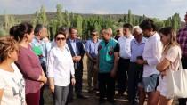 SAGALASSOS - Türkiye'nin En Büyük Lavanta Tarlasında Hasat Başladı