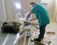DAĞ KEÇİSİ - Yaralı Köpeğe Veteriner Sahip Çıktı