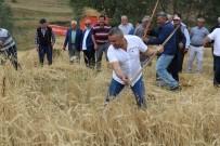 SOSYAL SORUMLULUK PROJESİ - 2 Bin Yıllık Ata Tohumu Buğday Verdi
