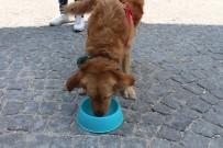 HAVA SICAKLIKLARI - (Özel) Evcil Hayvanları Dışarı Bu Saatlerde Çıkarın
