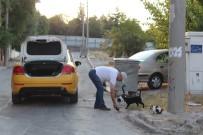 BUCA BELEDİYESİ - (Özel) Hayvansever Taksiciden İnsanlık Dersi