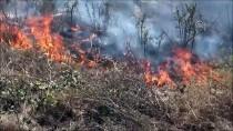 ANIZ YANGINI - Silivri'de Anız Yangını