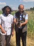 REHABİLİTASYON MERKEZİ - Tedavileri Tamamlanan Kuşlar Yaşam Alanlarına Bırakıldı