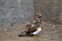 Yaralı Tavşancıl Kuşu, Rehabilitasyon Merkezine Sevk Edildi