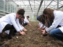 BİLİM ADAMI - Ziraat Mühendisleri, Tarlada Ve Çiftlikte Mesleği Öğreniyor