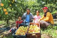 KAZANCı - Başkan Tarhan'dan Mezitli'deki Şeftali Üreticilerine Destek