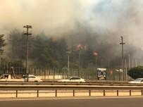 Bursa'daki Yangını Söndürmek İçin Balıkesir Ve Karabük'ten Helikopter, Ankara'dan Uçak İstendi