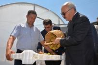 BİRİNCİ SINIF - Kaliteli İncir İçin Devlet Destekleri Sürüyor