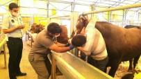 KAMERA SİSTEMİ - Kurbanlık Hayvanlara Diş Kontrolü