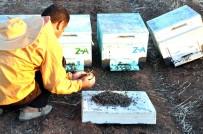 İL TARIM MÜDÜRLÜĞÜ - Milyonlarca Arı Öldü