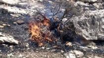 GÖKÇEBAĞ - Siirt'te Bağ Ve Bahçe Yangını