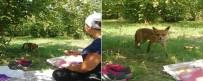FINDIK TOPLAMA - Bahçede Karşılaştığı Tilkiyle Sohbet Etti