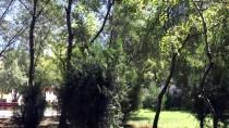 Baykuşlar Okul Bahçesini Mesken Tuttu