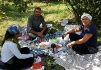 FINDIK TOPLAMA - Fındık Toplayan Kadın Karşısında Tilkiyi Görünce Sohbete Başladı