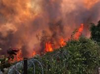 Orman yangınının nedeni belli oldu!