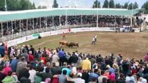 ARTVİN BELEDİYESİ - Türkiye Boğa Güreşi Şampiyonası