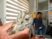Yaralı Baykuş'u Veterinerde Tedavi Ettirdi