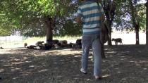 DICLE ÜNIVERSITESI - Diyarbakırlı Çoban, İngilizce Öğretmeni Olmak İstiyor