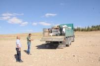 DEVLET SU İŞLERİ GENEL MÜDÜRLÜĞÜ - Gümüşler Barajı'na 40 Bin Sazan Bırakıldı