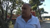 GÜNCELLEME - Çanakkale'de Orman Yangını