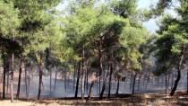 İLK MÜDAHALE - Hatay'da Mesire Alanında Yangın
