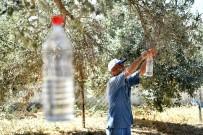 ZEYTİNYAĞI - Sinek Tuzağa Takıldı, 82 Bin Zeytin Ağacı Kurtuldu