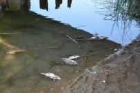 SINOP ÜNIVERSITESI - Sinop'taki Balık Ölümlerinin Sebebi Belli Oldu