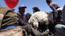 ÇıTAK - Tek Bacakla 20 Yıldır Çobanlık Yapıyor