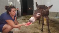 HAYVAN SEVERLER - Yaralı Eşeğe Hayvan Severler Sahip Çıktı
