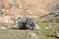 Kirpiyi Öldürmenin Cezası 2 Bin 449 Lira