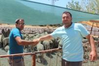 DEVE GÜREŞİ - Kuşadası'nda Kurban Bayramı Hazırlıkları Tamamlandı