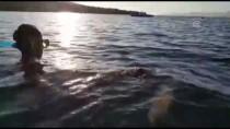 DENİZ KAPLUMBAĞALARI - Muğla'da Deniz Kaplumbağası Kurtarma Operasyonu