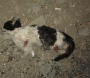 NİLÜFER - Vicdansızlar kedinin dört bacağını da kesti