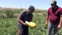 Yozgat'ta Kavun Karpuz Hasadı Başladı