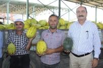 Çankırı'da Kavun Üretimi Yüzleri Güldürdü