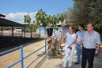 MESUT ÖZAKCAN - Dalama Hayvan Pazarı Bayrama Hazırlanıyor