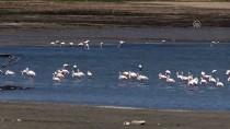 Gelingüllü Baraj Gölü'nde Kuş Sayısı Artıyor