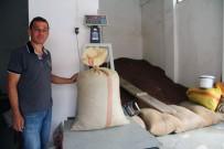 GİRESUN - Giresun'da Serbest Piyasada Fındık Fiyatı 14 Liraya Dayandı