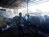 BÜYÜKBAŞ HAYVAN - Hatay'da Ahırda Yangın Çıktı