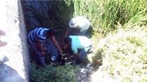 TOSUNLAR - Tokat'ta Su Kanalına Düşen İneği İtfaiye Kurtardı