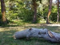 Ağaçları Çıra İçin Katlettiler