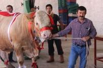 Bir ton 170 kilogramlık 'Kral' görücüye çıktı
