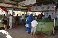 DENİZ KAPLUMBAĞALARI - Deniz Kaplumbağalarına Yerli Ve Yabancı Turist İlgisi